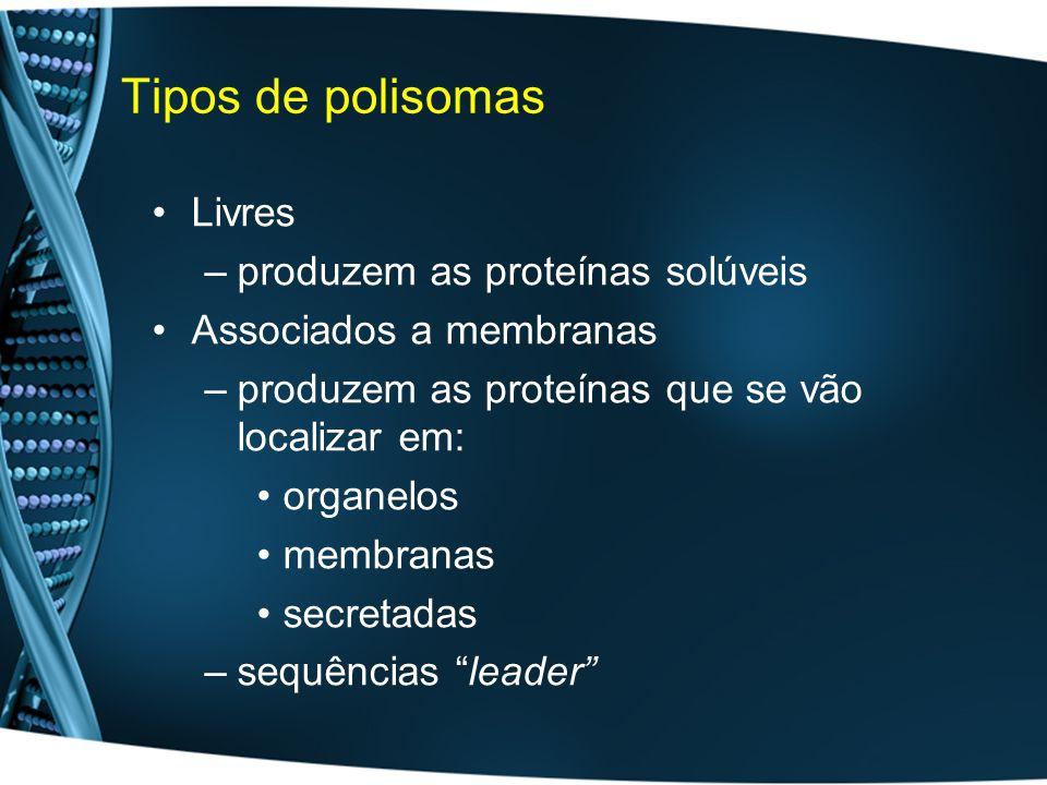 Tipos de polisomas Livres produzem as proteínas solúveis