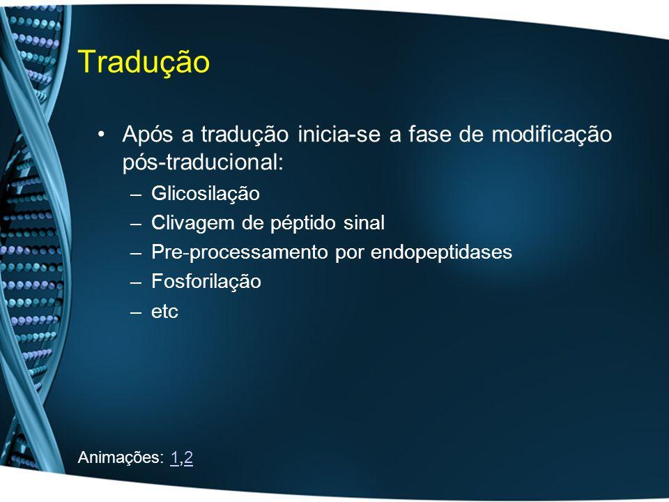 Tradução Após a tradução inicia-se a fase de modificação pós-traducional: Glicosilação. Clivagem de péptido sinal.