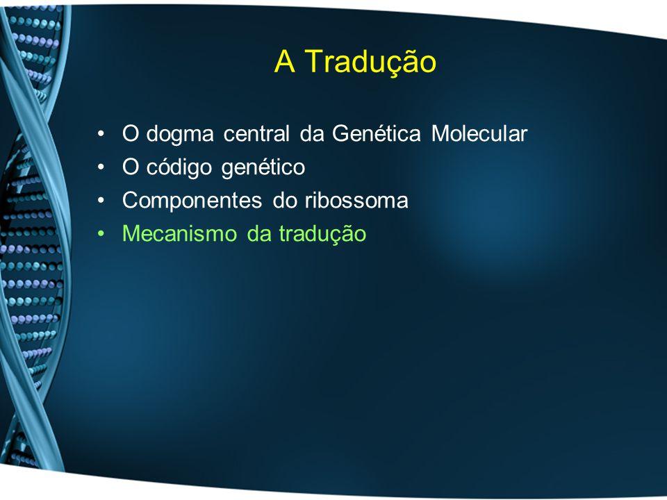 A Tradução O dogma central da Genética Molecular O código genético