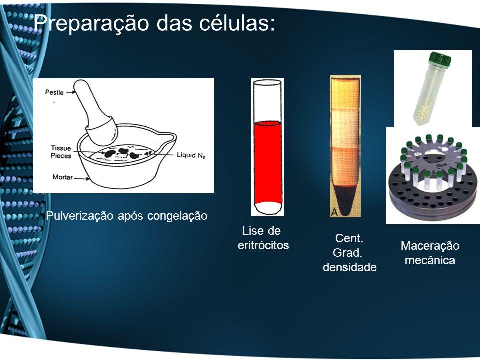 Preparação das células:
