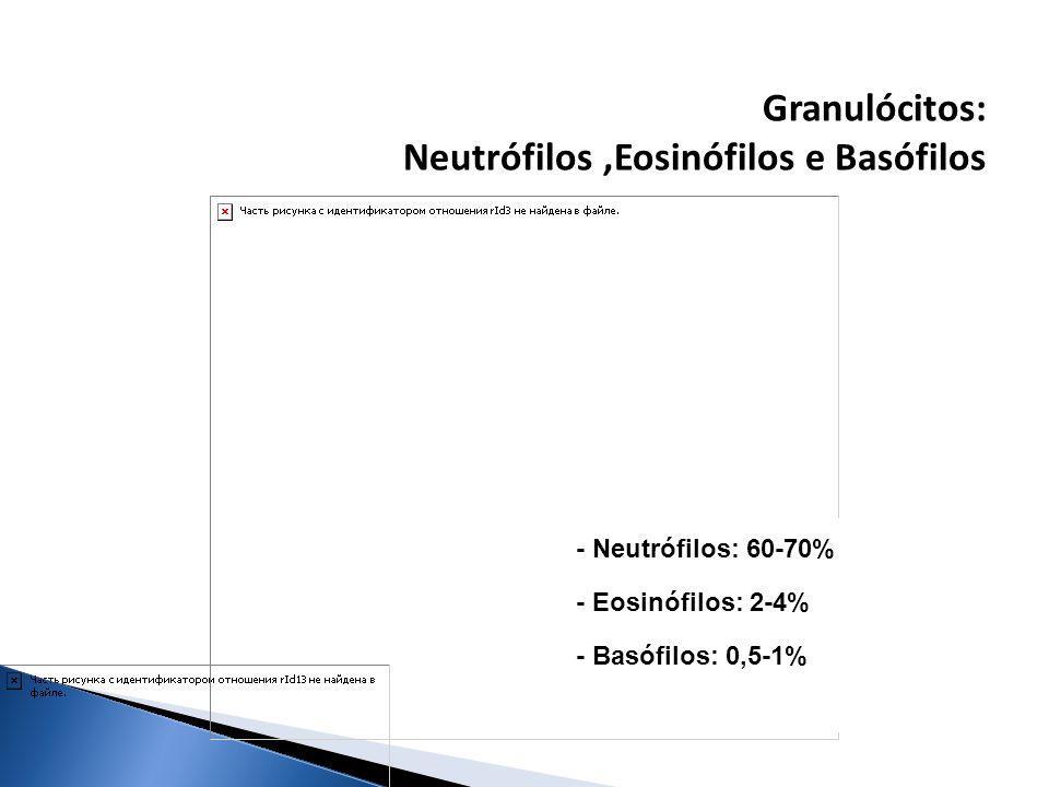 Neutrófilos ,Eosinófilos e Basófilos