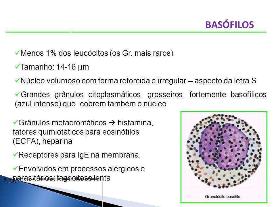 BASÓFILOS Menos 1% dos leucócitos (os Gr. mais raros)