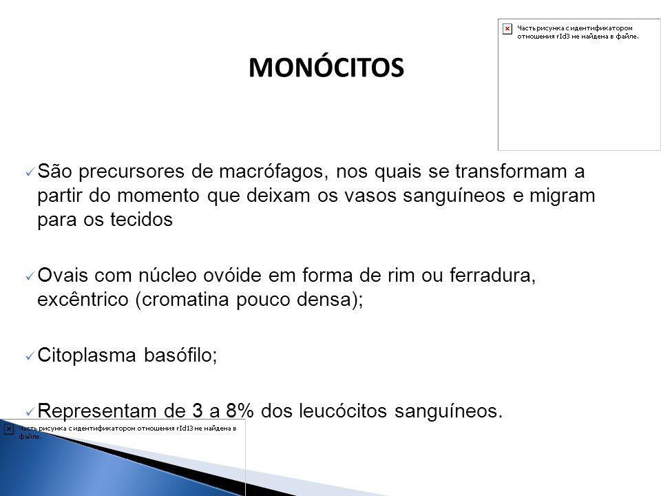 MONÓCITOS São precursores de macrófagos, nos quais se transformam a partir do momento que deixam os vasos sanguíneos e migram para os tecidos.