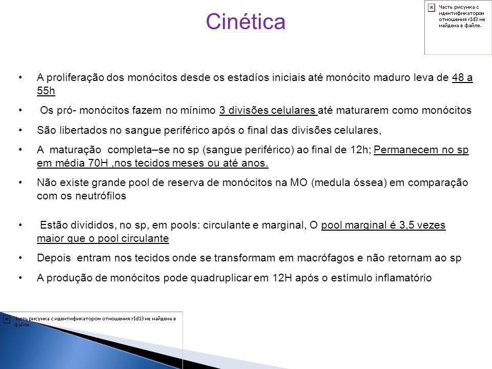 Cinética A proliferação dos monócitos desde os estadíos iniciais até monócito maduro leva de 48 a 55h.