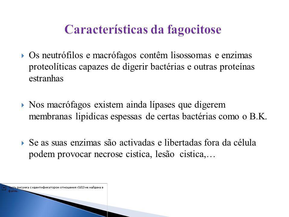 Características da fagocitose