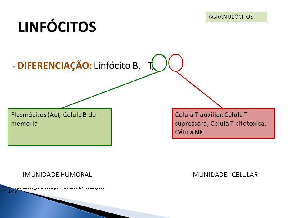LINFÓCITOS DIFERENCIAÇÃO: Linfócito B, T, NK