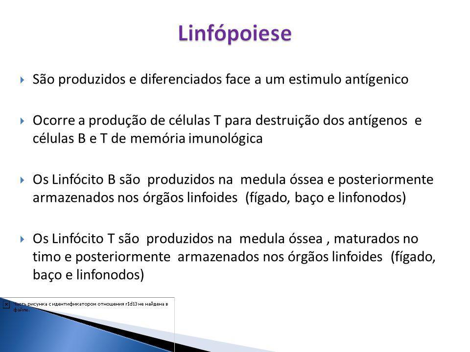 Linfópoiese São produzidos e diferenciados face a um estimulo antígenico.
