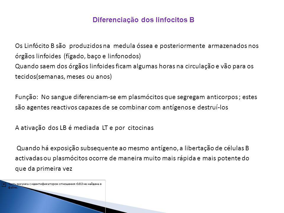 Diferenciação dos linfocitos B