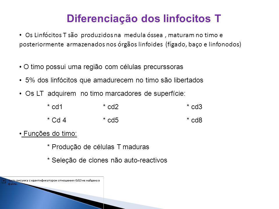 Diferenciação dos linfocitos T