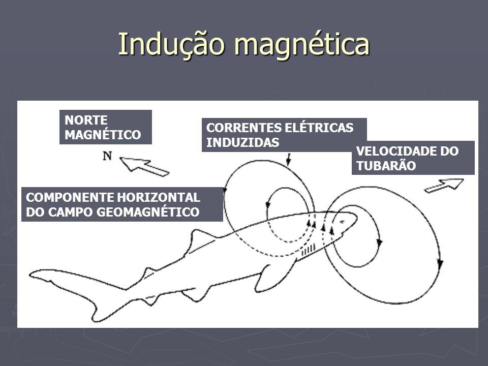 Indução magnética NORTE MAGNÉTICO CORRENTES ELÉTRICAS INDUZIDAS