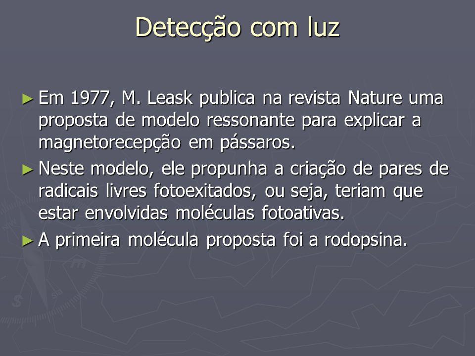 Detecção com luz Em 1977, M. Leask publica na revista Nature uma proposta de modelo ressonante para explicar a magnetorecepção em pássaros.