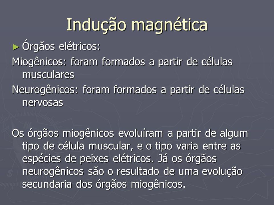 Indução magnética Órgãos elétricos: