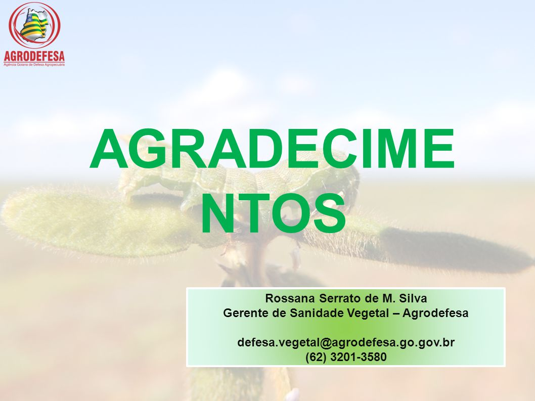Rossana Serrato de M. Silva Gerente de Sanidade Vegetal – Agrodefesa