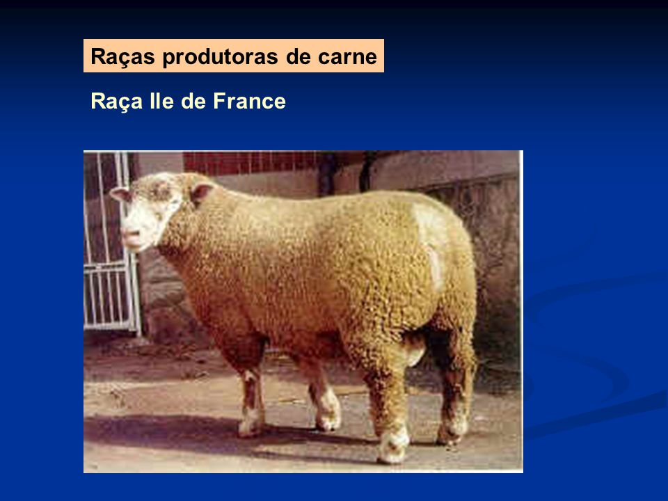 Raças produtoras de carne