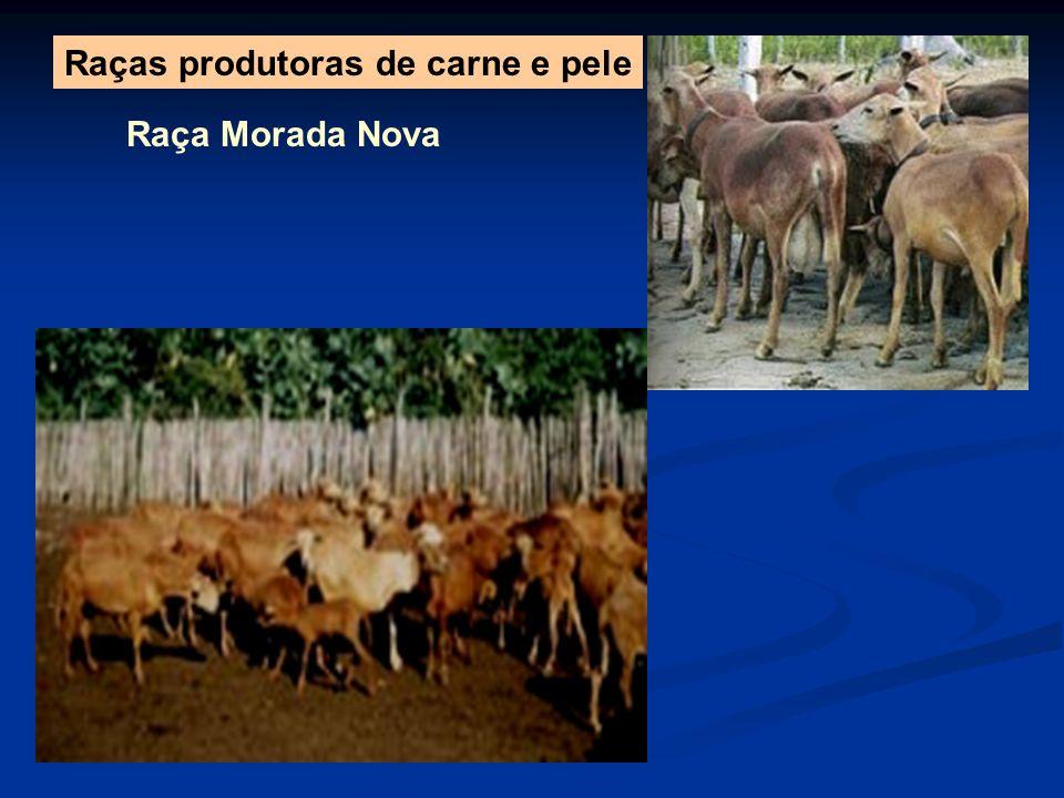 Raças produtoras de carne e pele