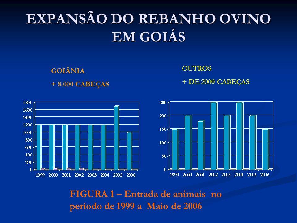 EXPANSÃO DO REBANHO OVINO EM GOIÁS