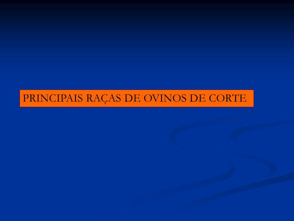 PRINCIPAIS RAÇAS DE OVINOS DE CORTE