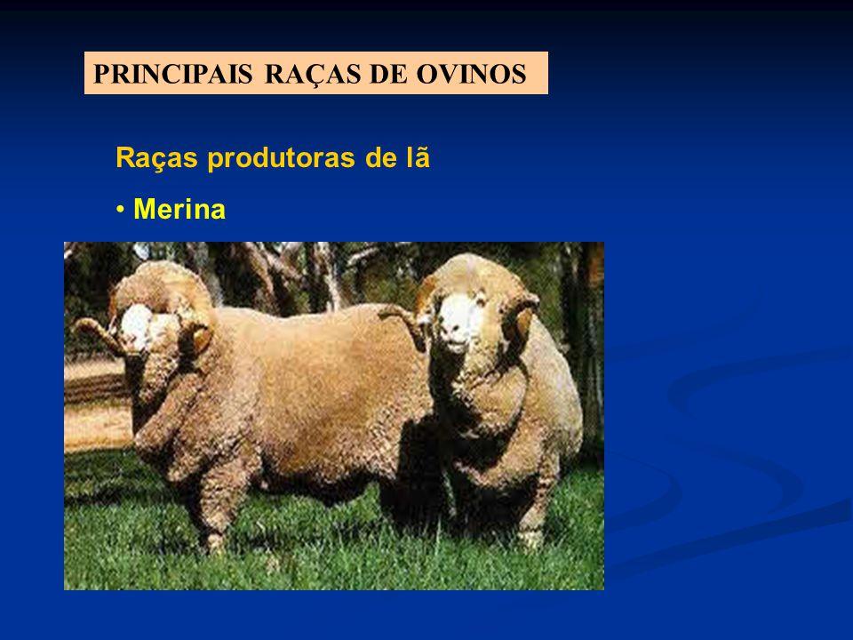 PRINCIPAIS RAÇAS DE OVINOS