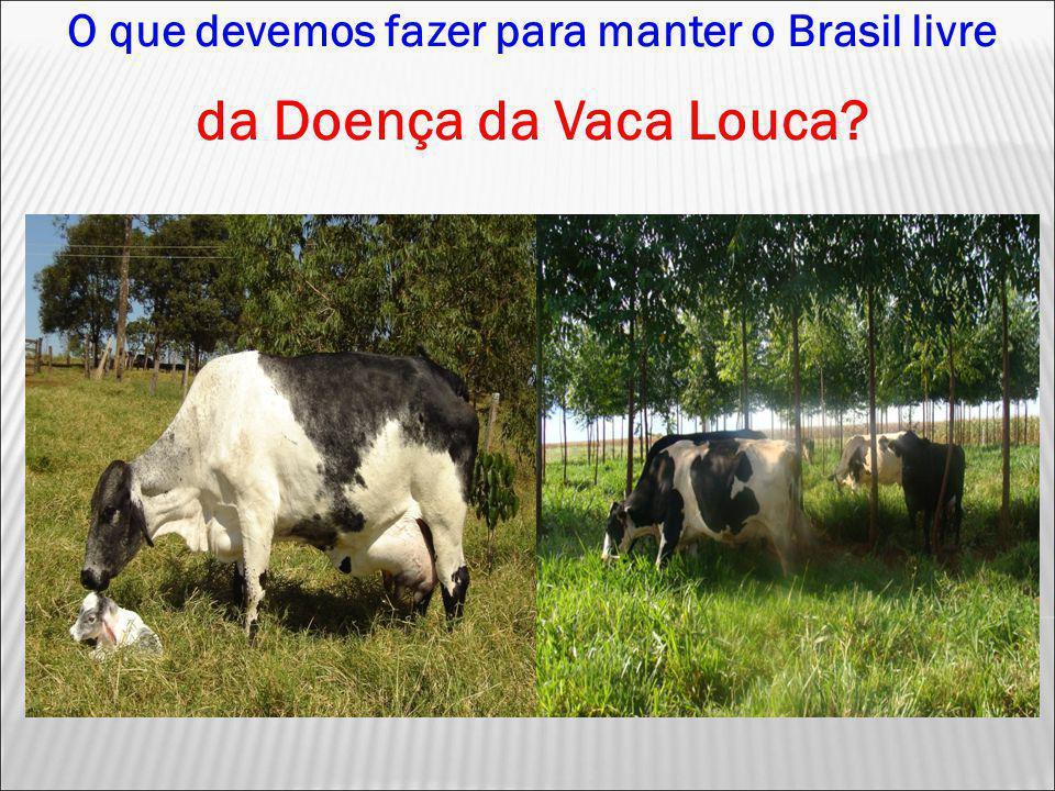 O que devemos fazer para manter o Brasil livre da Doença da Vaca Louca