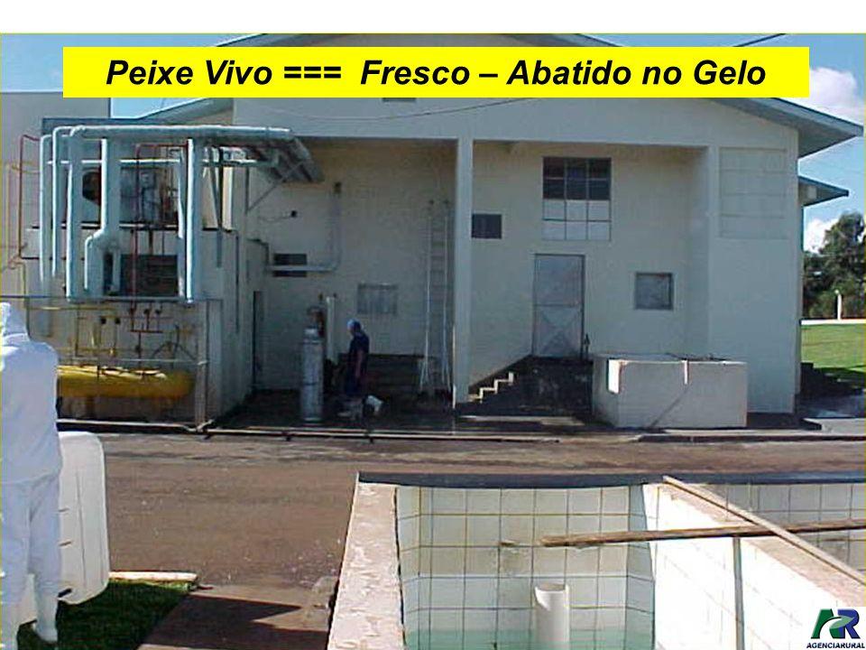 Peixe Vivo === Fresco – Abatido no Gelo