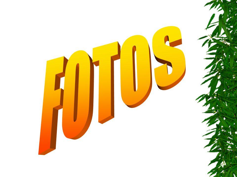 FOTOS 1