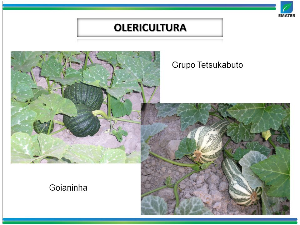 OLERICULTURA Grupo Tetsukabuto Goianinha
