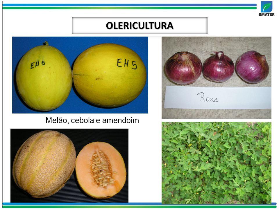 OLERICULTURA Melão, cebola e amendoim