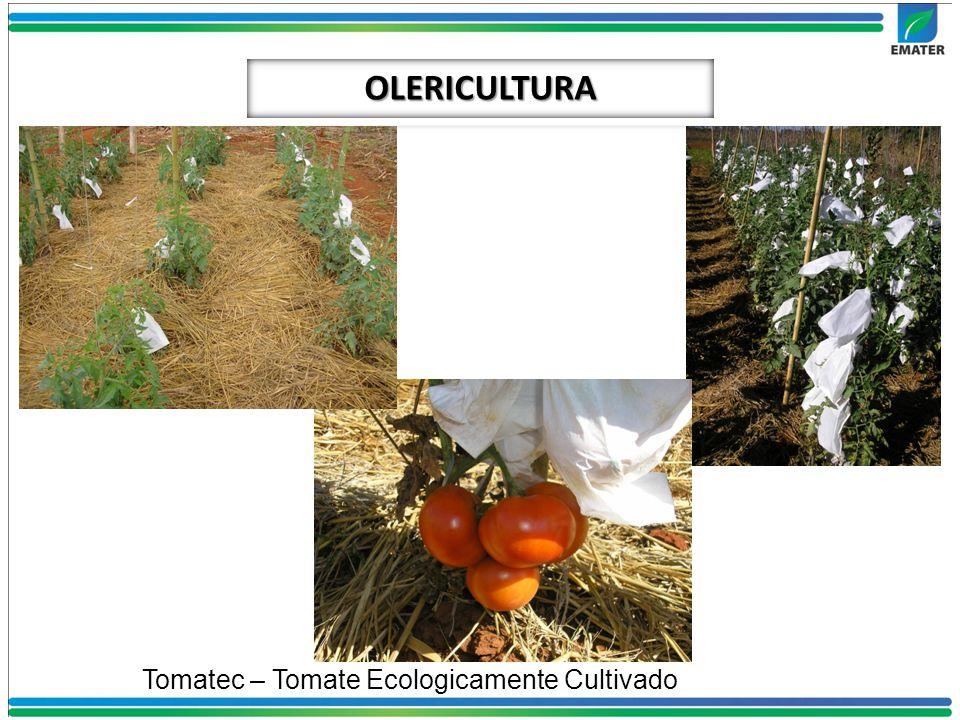 OLERICULTURA Tomatec – Tomate Ecologicamente Cultivado