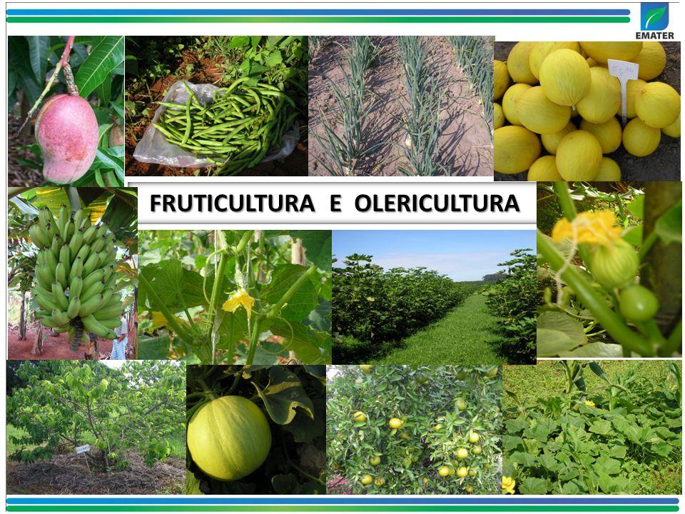 FRUTICULTURA E OLERICULTURA
