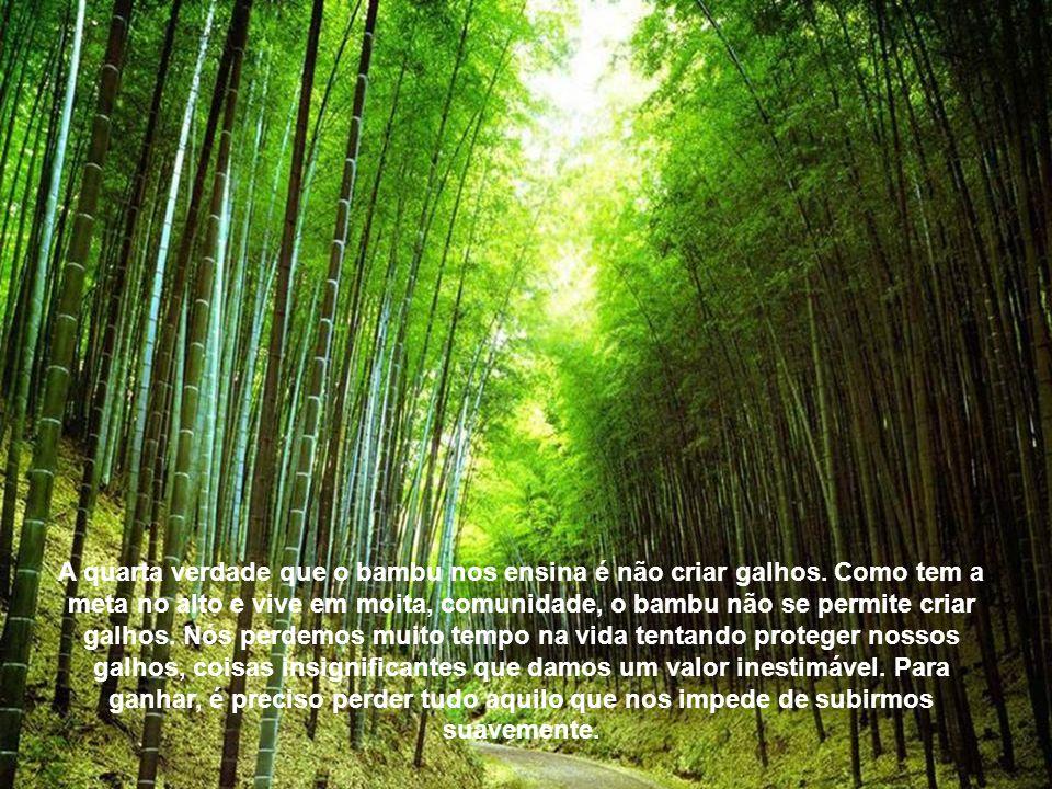 A quarta verdade que o bambu nos ensina é não criar galhos