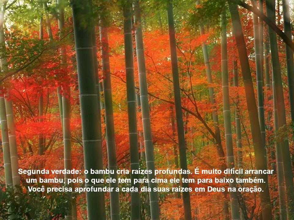 Segunda verdade: o bambu cria raízes profundas