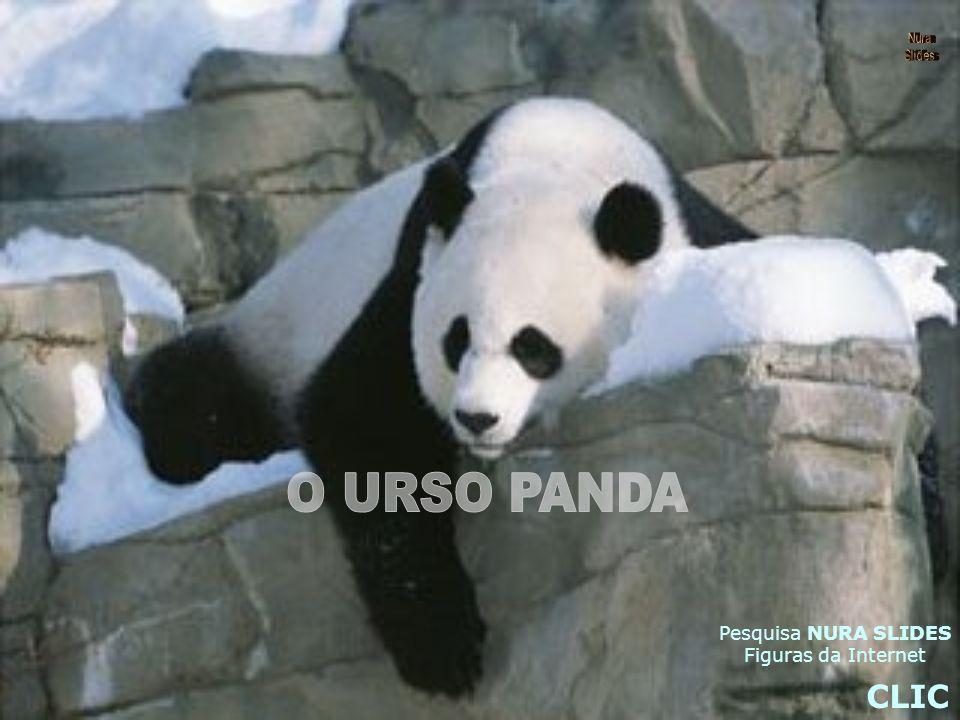 Nura Slides O URSO PANDA Pesquisa NURA SLIDES Figuras da Internet CLIC