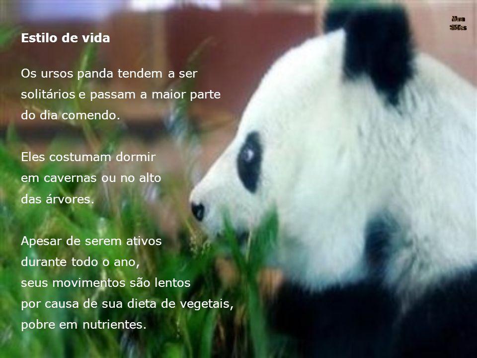 Os ursos panda tendem a ser solitários e passam a maior parte