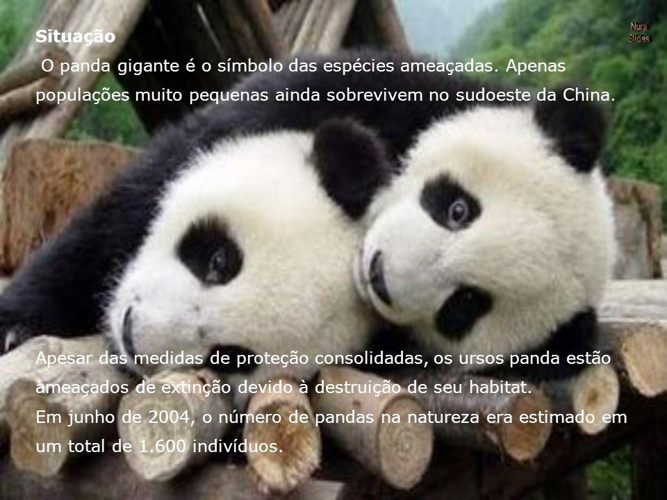 O panda gigante é o símbolo das espécies ameaçadas. Apenas