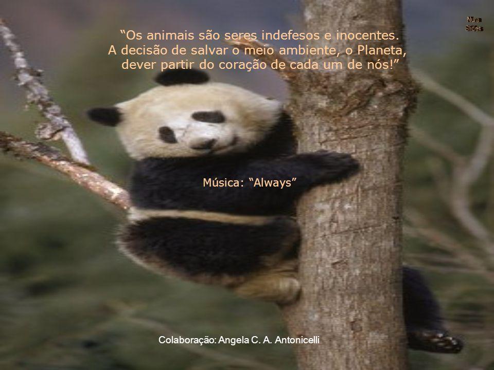 Os animais são seres indefesos e inocentes.