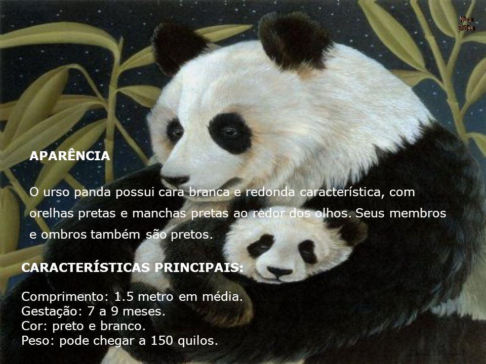 O urso panda possui cara branca e redonda característica, com