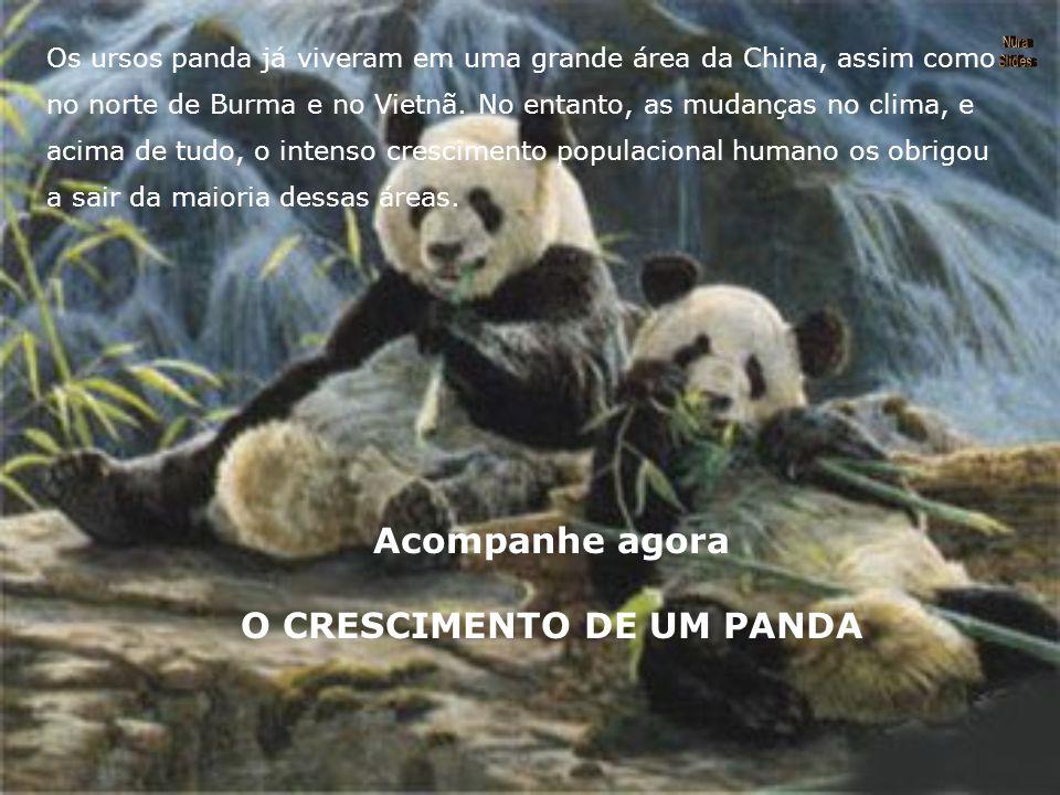 O CRESCIMENTO DE UM PANDA