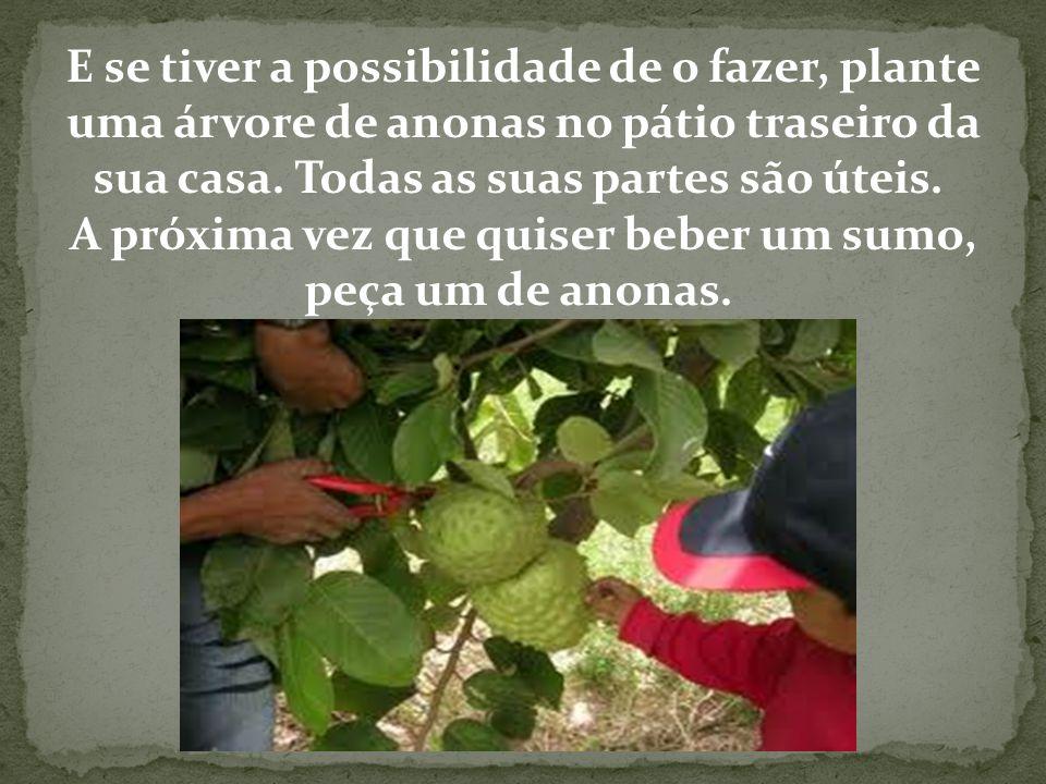 E se tiver a possibilidade de o fazer, plante uma árvore de anonas no pátio traseiro da sua casa. Todas as suas partes são úteis. A próxima vez que quiser beber um sumo, peça um de anonas.