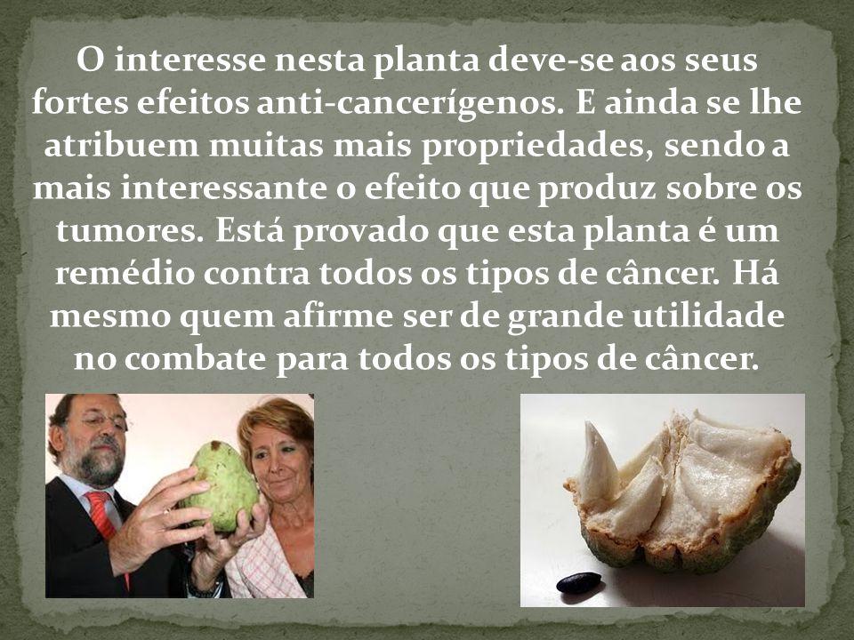 O interesse nesta planta deve-se aos seus fortes efeitos anti-cancerígenos.