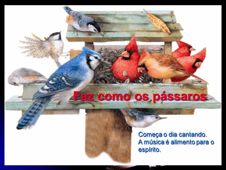 Faz como os pássaros Começa o dia cantando. A música é alimento para o espírito.