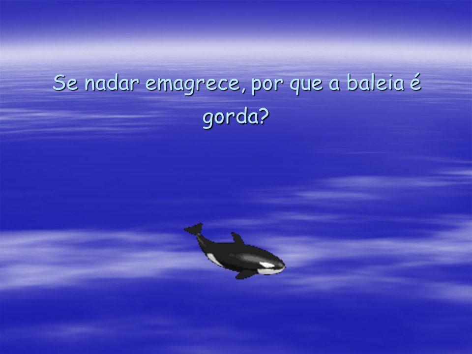 Se nadar emagrece, por que a baleia é gorda
