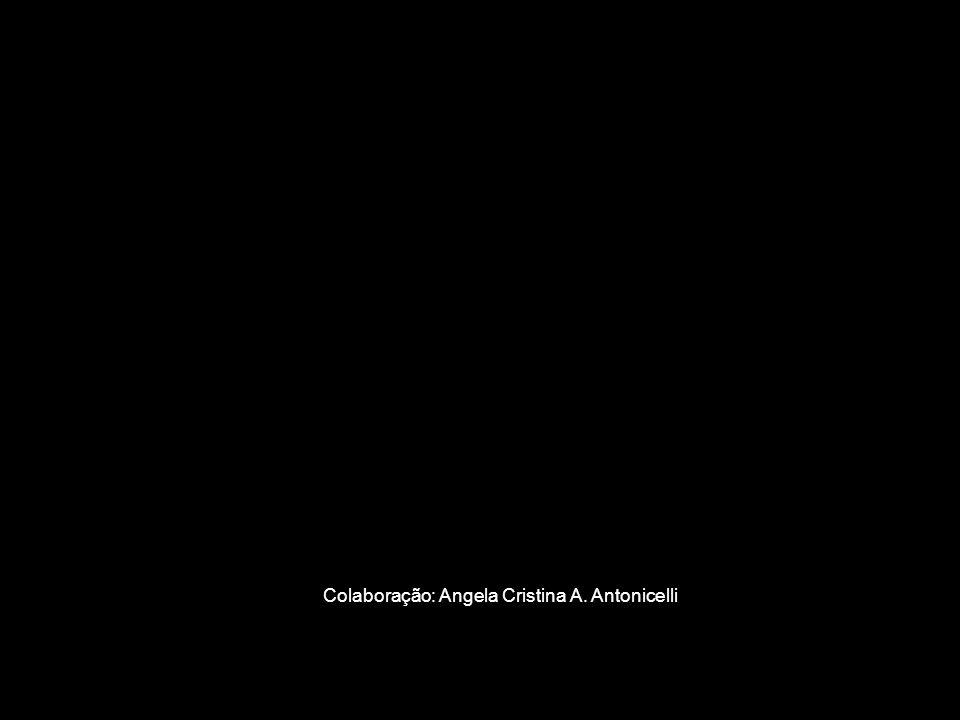 Colaboração: Angela Cristina A. Antonicelli