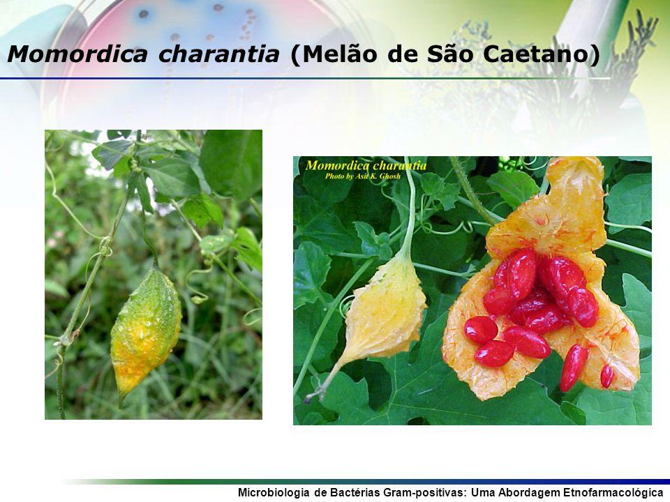 Momordica charantia (Melão de São Caetano)