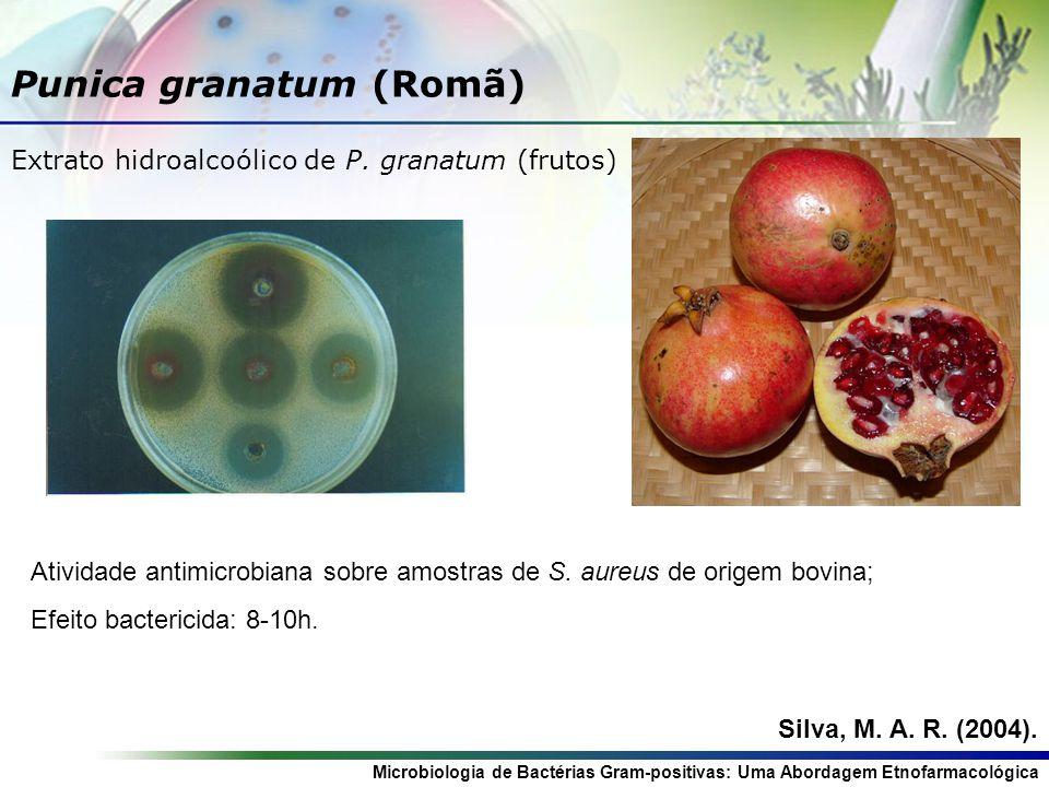 Punica granatum (Romã)