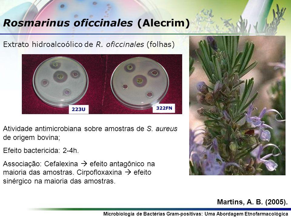 Rosmarinus oficcinales (Alecrim)