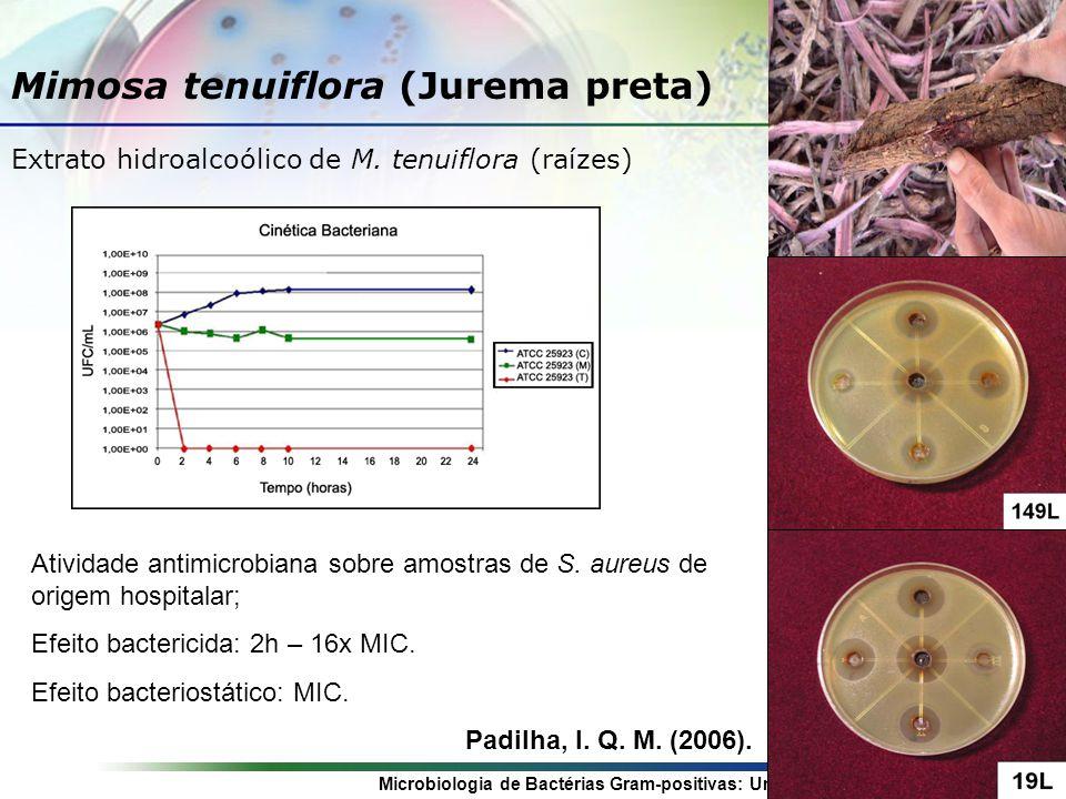 Mimosa tenuiflora (Jurema preta)
