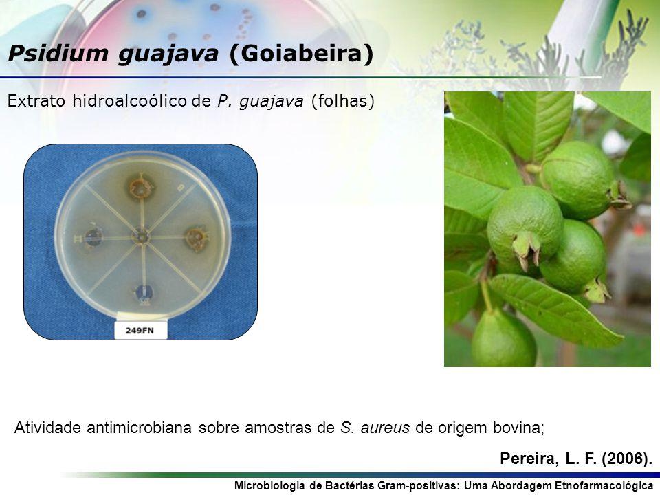 Psidium guajava (Goiabeira)