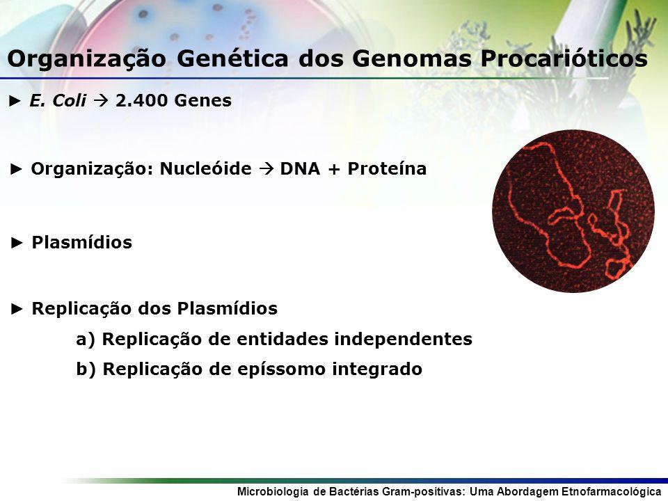 Organização Genética dos Genomas Procarióticos