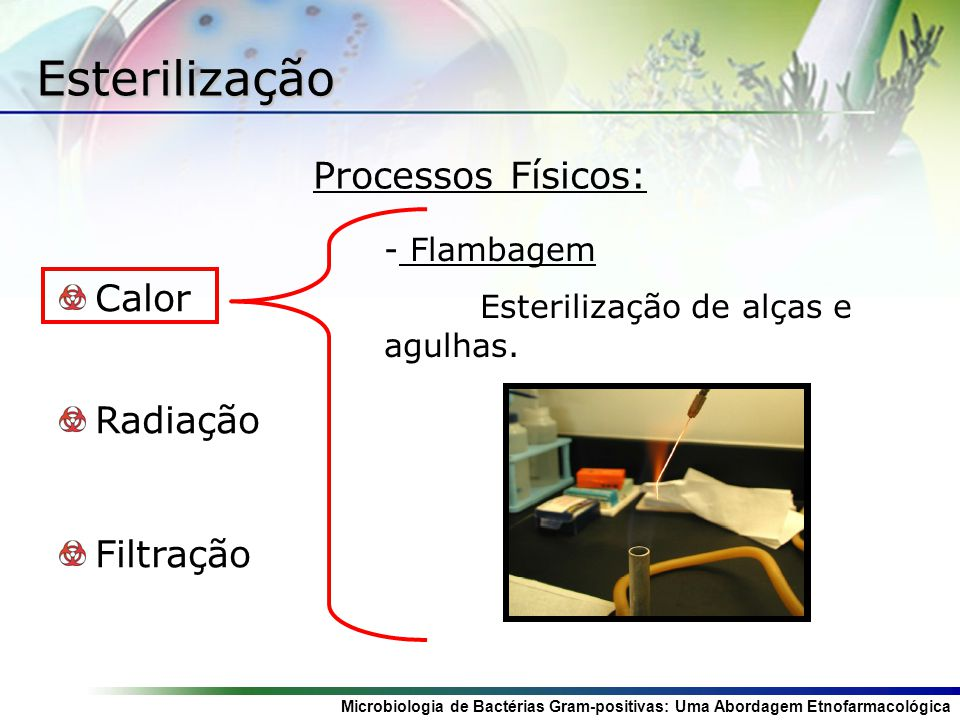 Esterilização Processos Físicos: Calor Radiação Filtração Flambagem