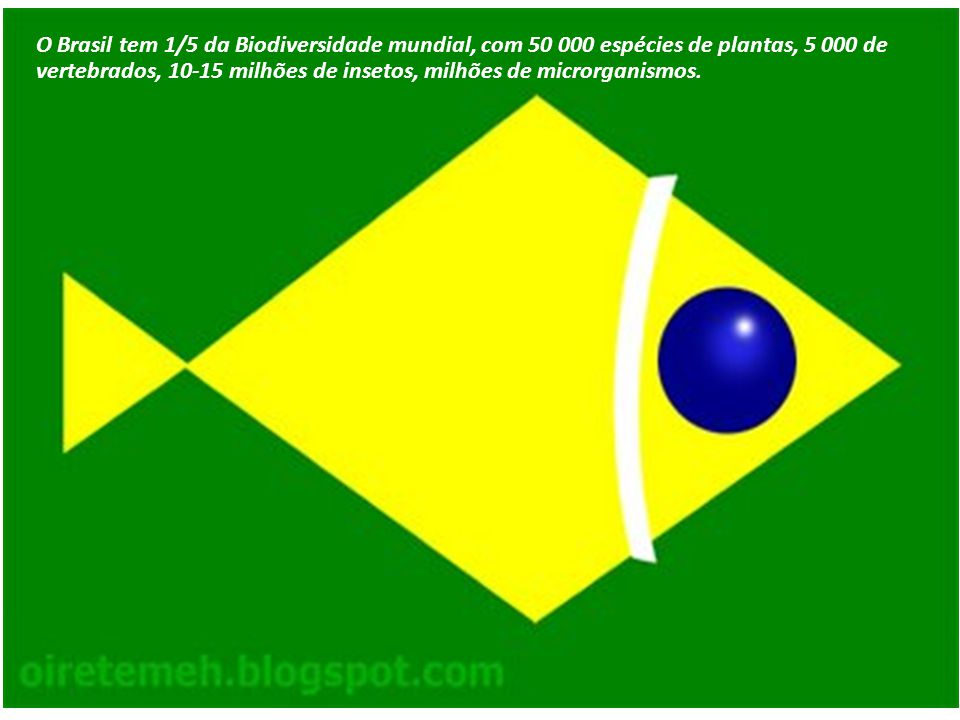 O Brasil tem 1/5 da Biodiversidade mundial, com 50 000 espécies de plantas, 5 000 de vertebrados, 10-15 milhões de insetos, milhões de microrganismos.
